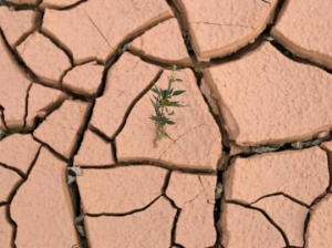 pianta ottimista