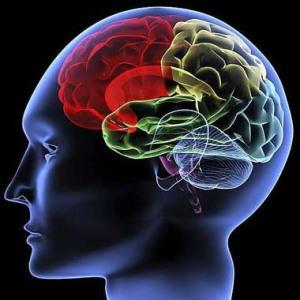 usare la parte razionale del cervello o puntare sull'irrazionalità?